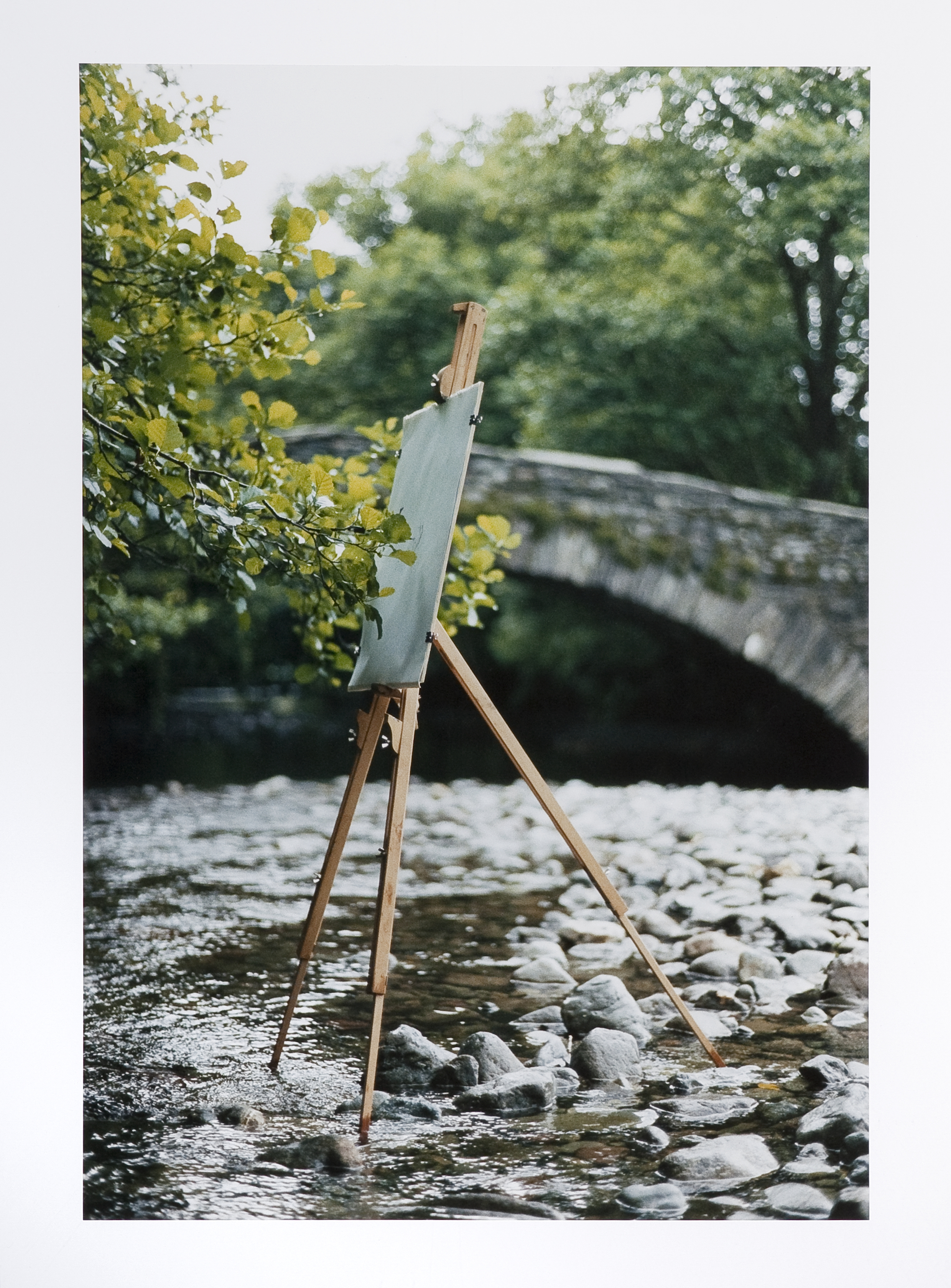 T.Knowles_Tree Drawing – Alder on easel #2_PRINT